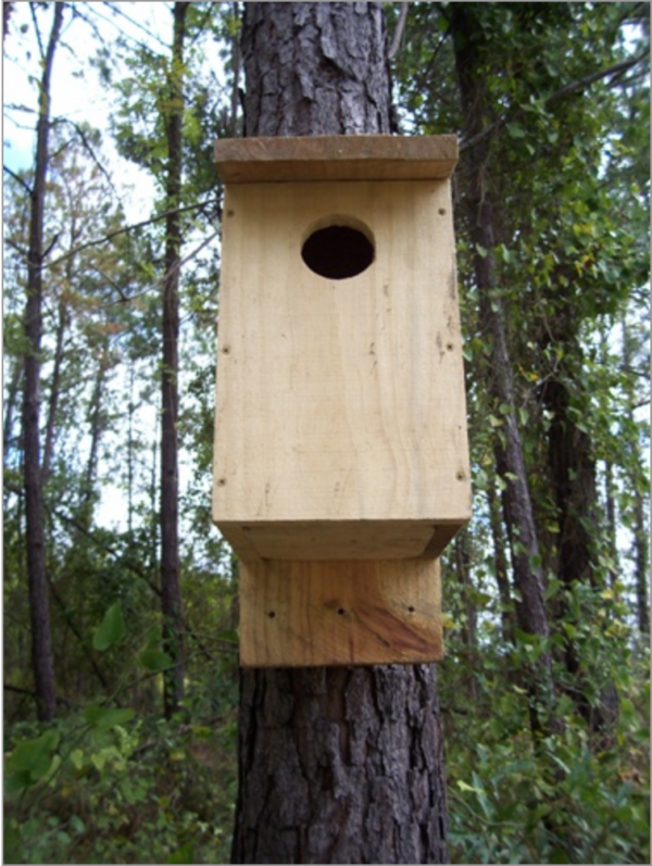 small raptor house seen from below